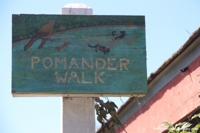 7. Pomander Walk (north) - small